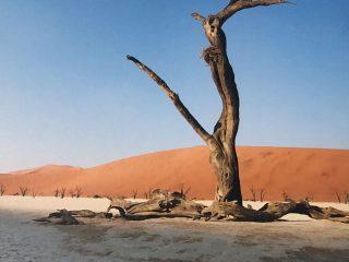 Namibian Tree