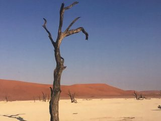 The Desert Tree